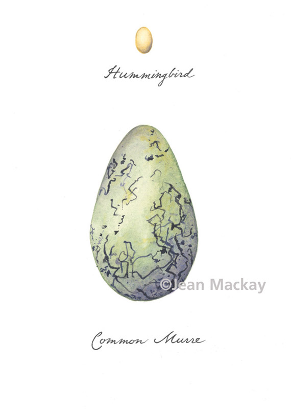 Hummingbird and Murre Eggs. watercolor. 8x10