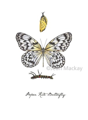 Paper Kite Butterfly. watercolor and ink. 8x10