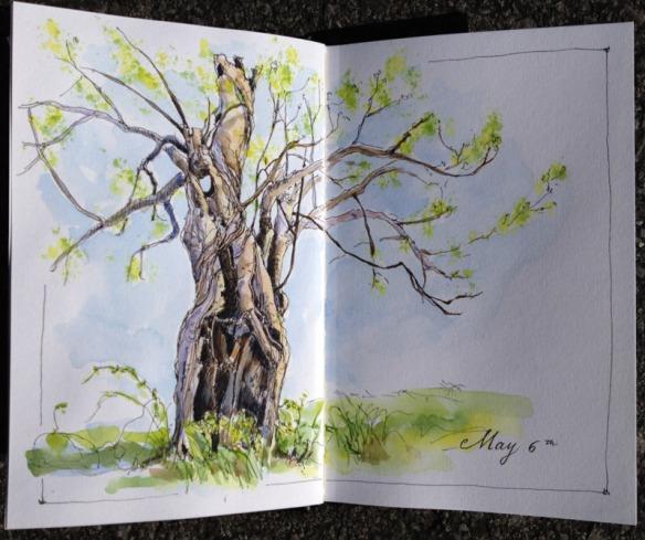 Apple Tree 2014