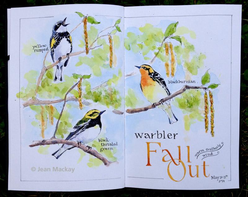 Warblers 2014
