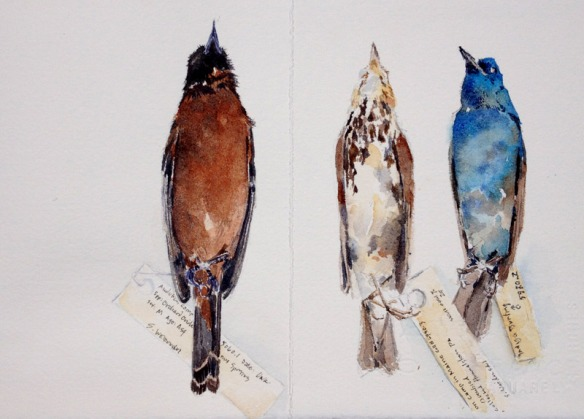 BirdSkins