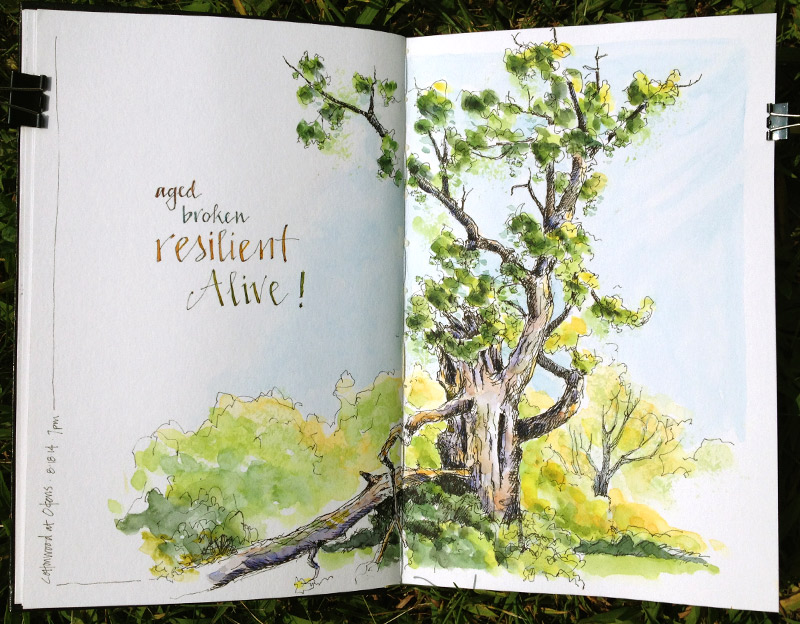 Cottonwood-Resilient