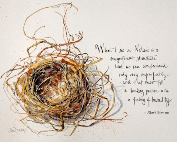 Song Sparrow Nest (final)