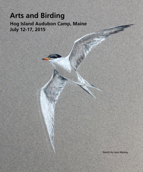 Common Tern- Arts & Birding