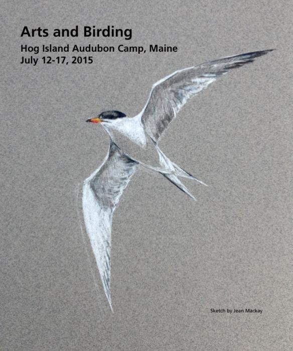 Common Tern- Arts & Birding