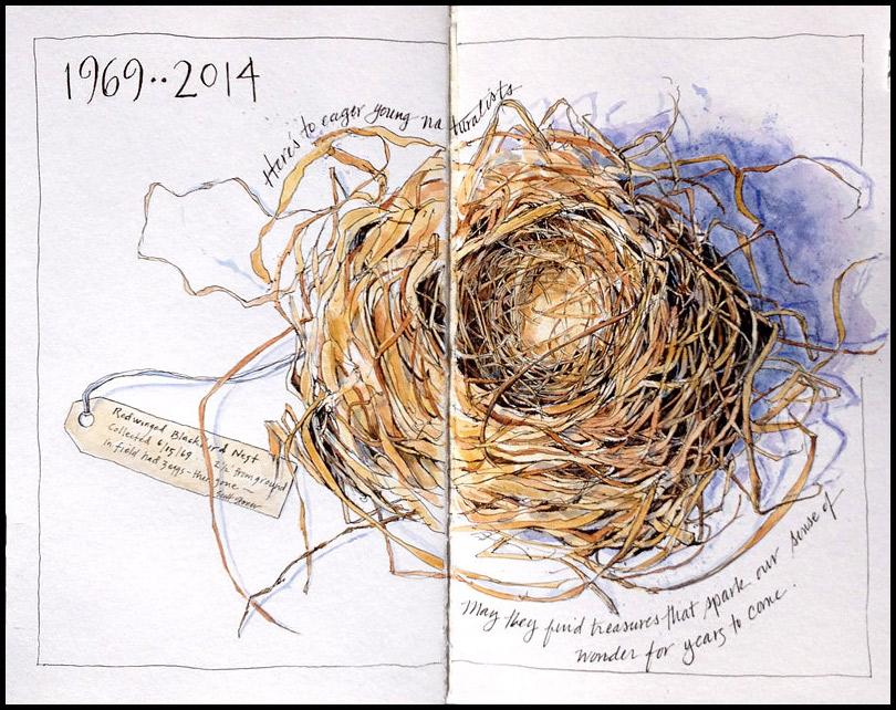 Red-winged Blackbird nest