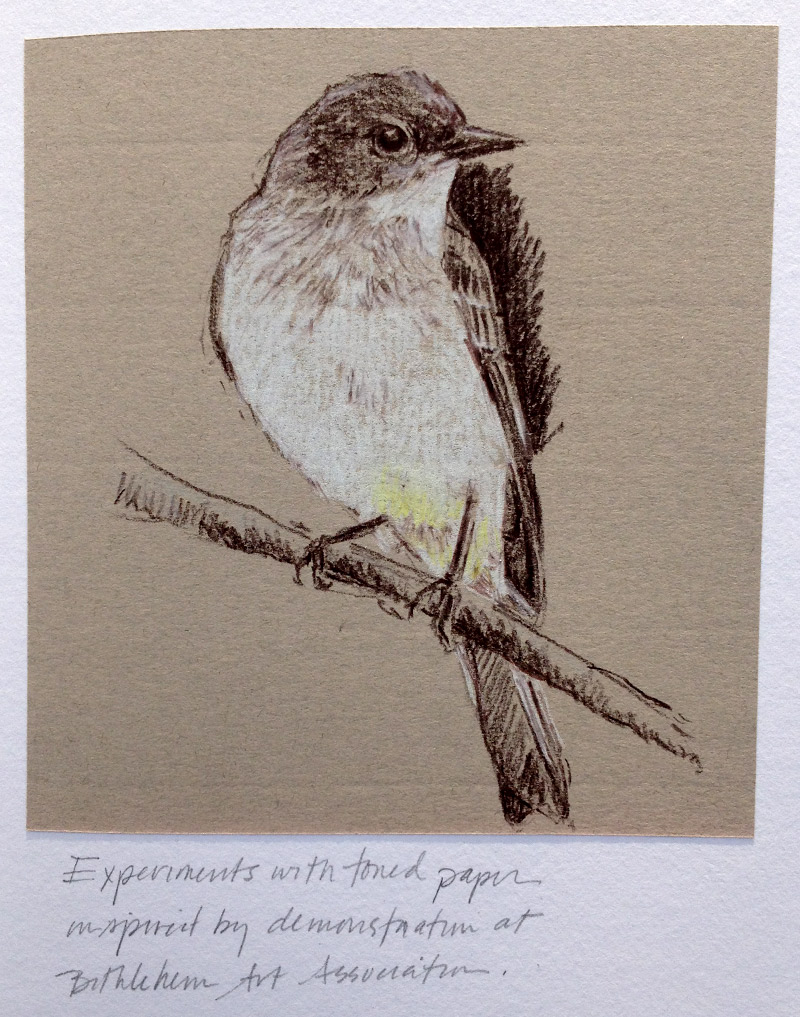 Eastern phoebe, toned paper