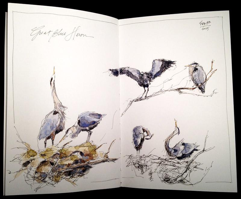 Great Blue Heron- gesture sketches