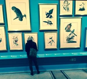 Audubons Aviary