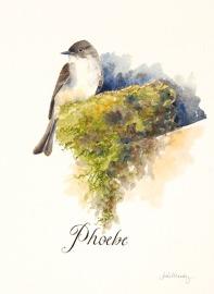 Eastern Phoebe, watercolor, 8x10