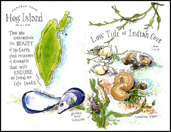 2015 Low Tide, Hog Island, Maine