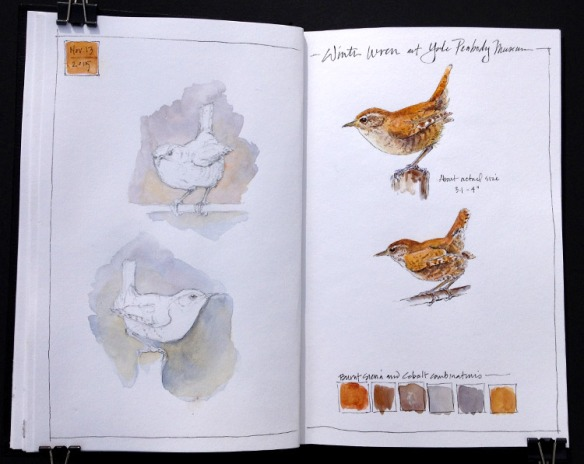 Winter Wren_Journal