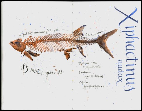 FossilFish_Peabody_750b