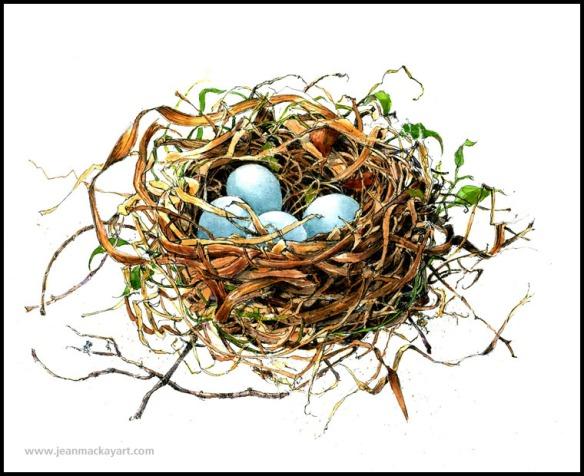 Nest_catbird
