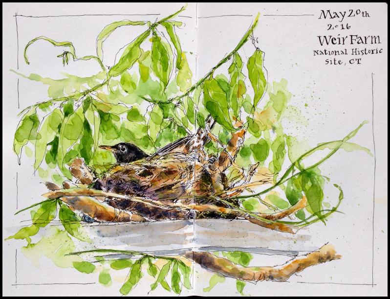 Robin-Nest_WeirFarmNHS