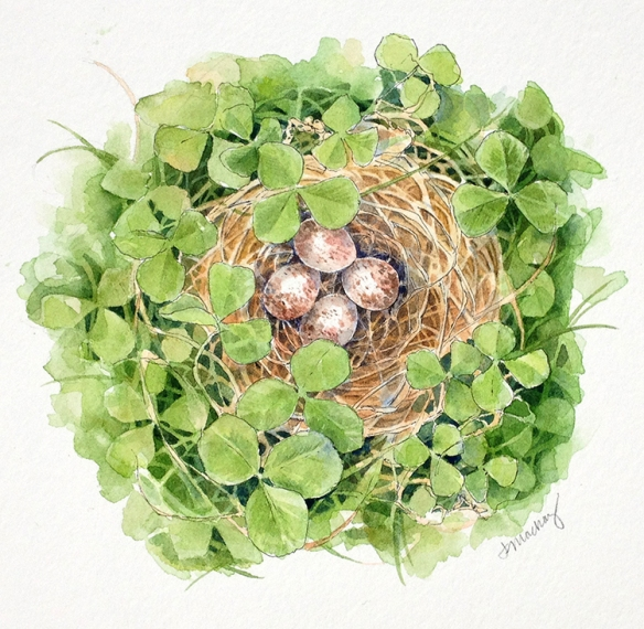 "Song Sparrow Nest, 8x8"", watercolor, 2016"