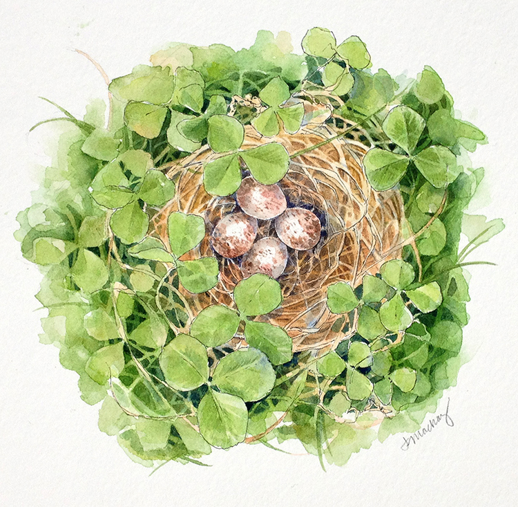 """Song Sparrow Nest, 8x8"""", watercolor, 2016"""
