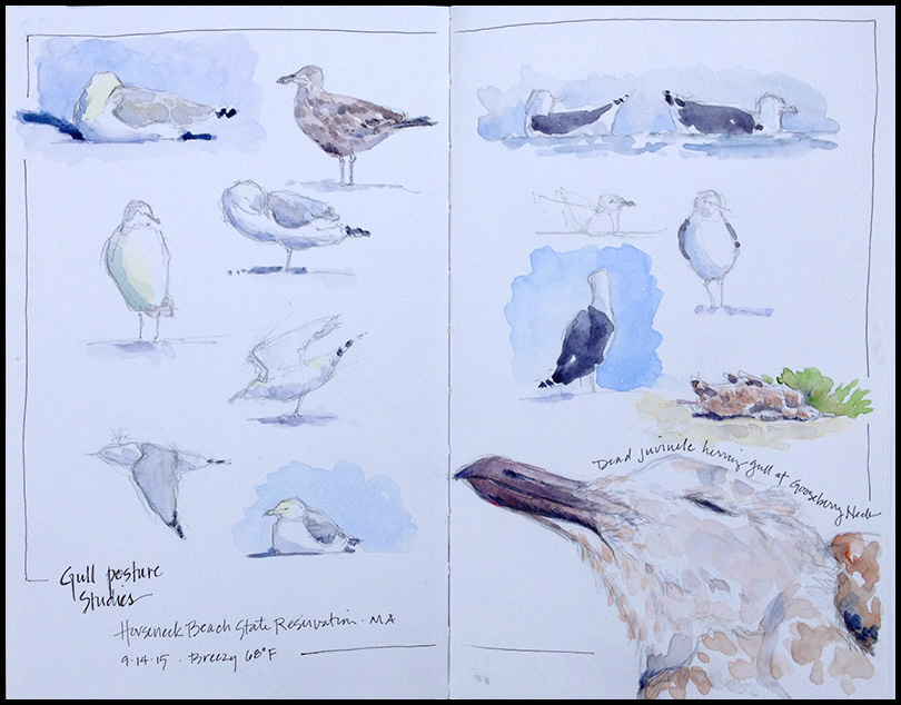 White on White- White birds on white paper can be a challenge. I've added a bit of sky and skim of shadow to give shape to these gulls.