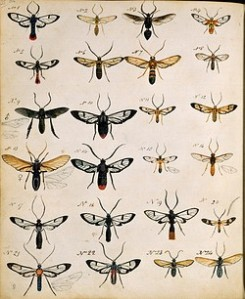 Henry Walter Bates, Insects of the Amazon