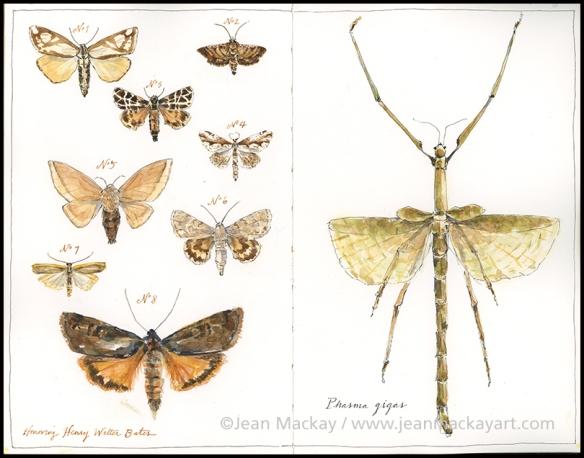 moths2-signed