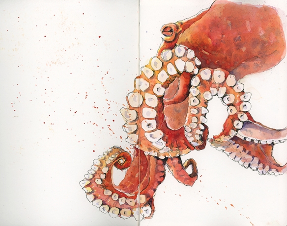 octopus_800