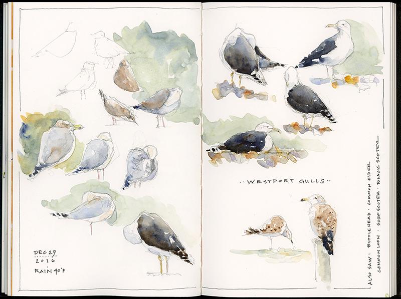 click to view larger; watercolor in Stillman & Birn Zeta sketchbook