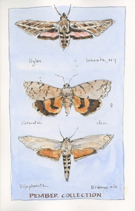 moths_750