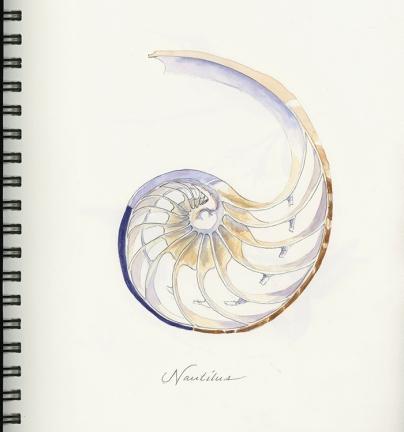 nautilus-cut_700px