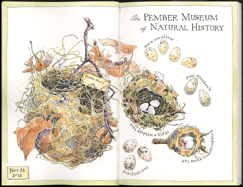 pember_eggs-nest_2016_800c