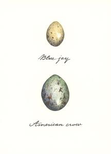 eggs-jay-crow_700px