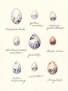 eggs-variety2_700px