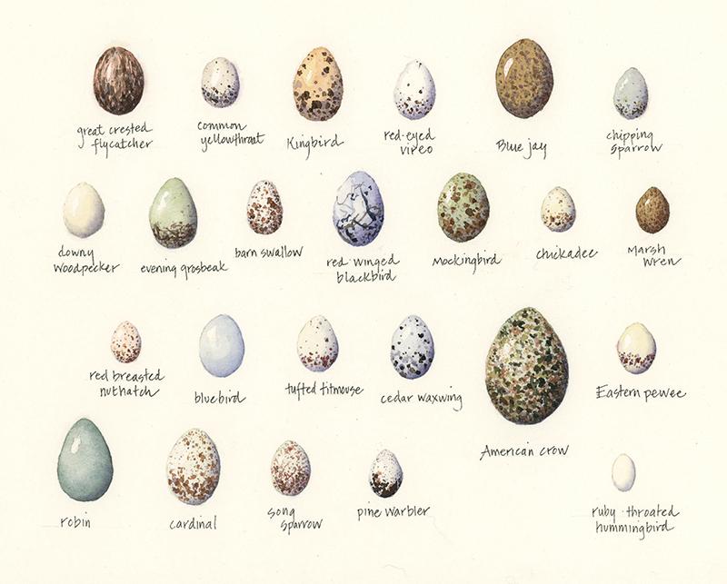 Eggs- variety
