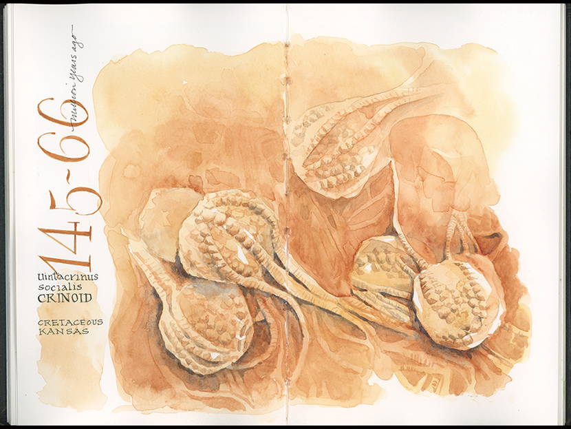 Click to view larger. Watercolor in Stillman & Birn Beta journal