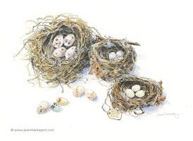 Nest Trio, watercolor, 8x10