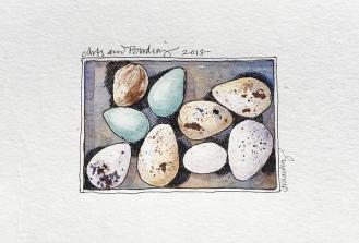 Maine-Arts-Birding_eggs