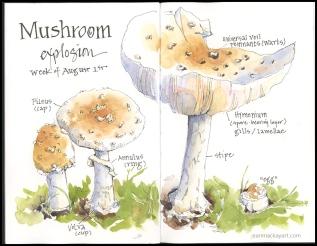 mushroom explosion 2018