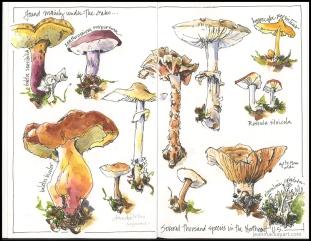 mushrooms 2018