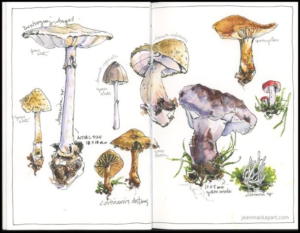 mushrooms 02 - 2018