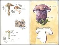 mushroom-03 2018