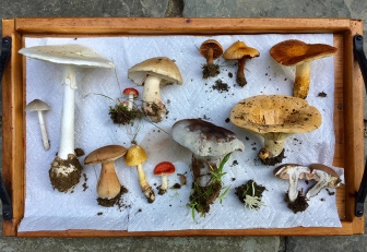 Mushroom- collection 2018