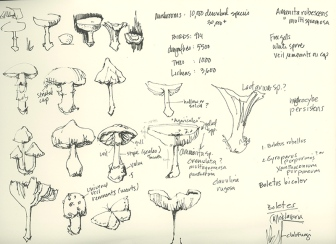 mushroom-notes 2018