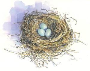 Nest-Robin_JMACKAY