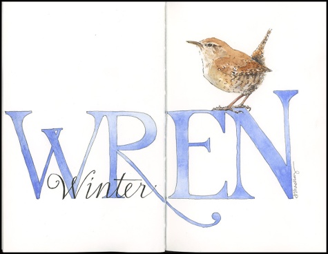 Winter wren 2019
