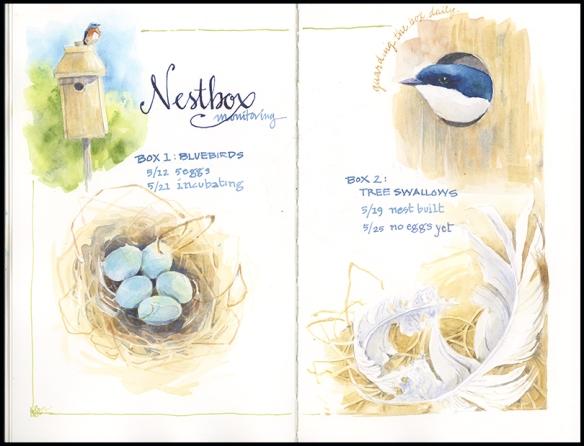 nestbox2019