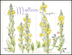 Mullein and Mosquitoes, JMACKAY