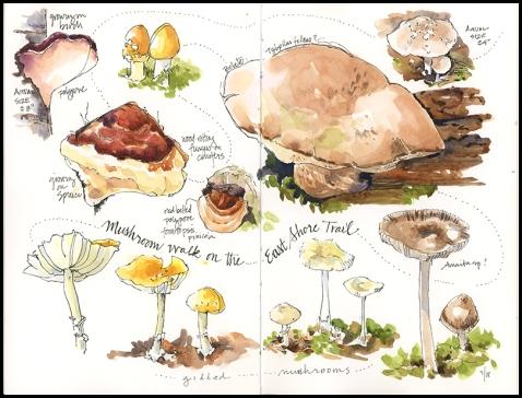Mushrooms-Hog Island, JMACKAY