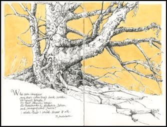 Old Spruce, JMACKAY