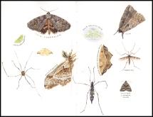 moths2019
